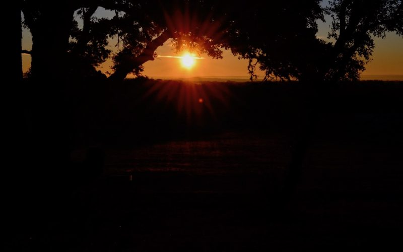 Sunset: The round sun is going down between the tree branches.