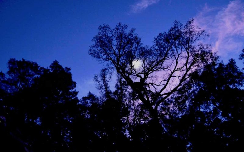 Sunset: The sky is turning purple and the trees are black because they are in the shadow