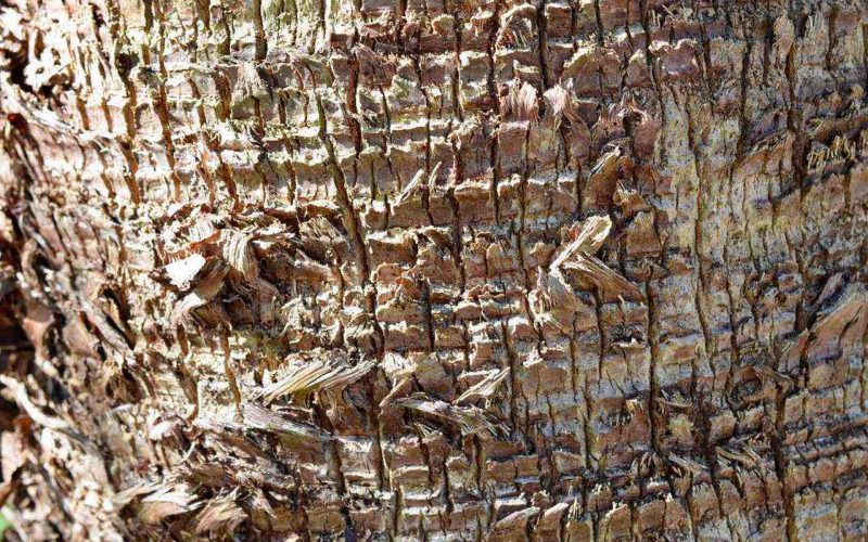 Close up of tree bark