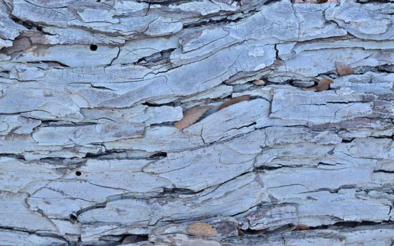 Closeup of a green tree trunk, which is cracked in some places