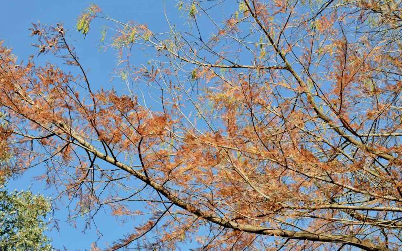 Red fall leaves on a branch against the blue sky