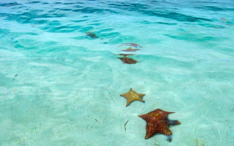 Ocean water on the shore that is a clear blue that permits you to see 4 yellow and red starfish on it's floor